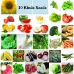 seeds for survival