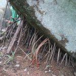 Strong sticks holding up rocks