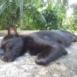 black farm cat
