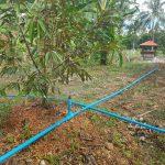 Irrigation and Sala