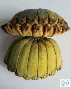 views of bananas